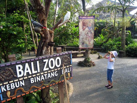 Hasil gambar untuk bali zoo