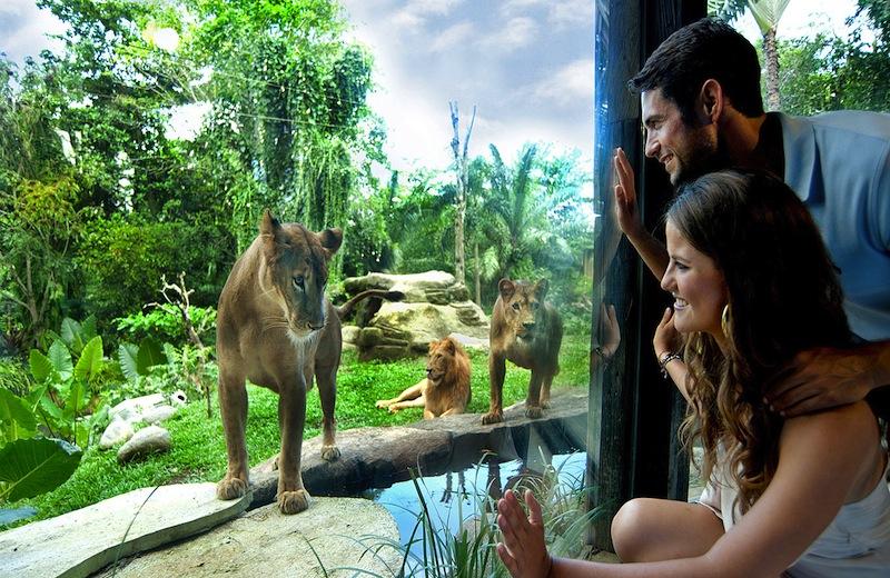 Breakfast With Lions Bali Safari & Marine Park - Bali Sari Tour
